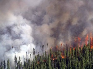 Crowning Forest Fire in Spruce Forest